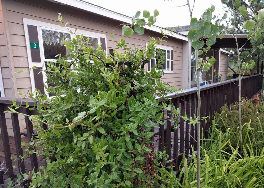 Property in Questa - NM